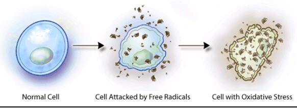 Free radicals damage #health | Healthy Lifestyle | Pinterest
