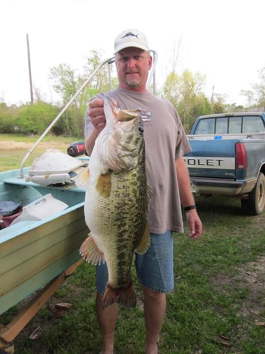 Walter s big bass would look small compared to this for Big bass fishing
