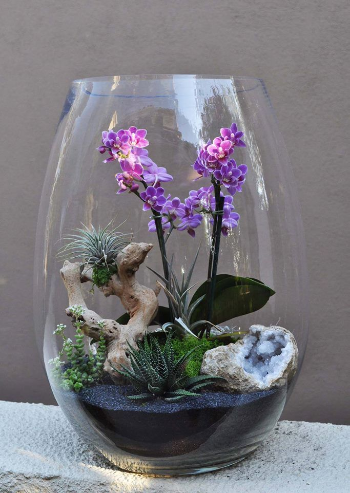 Orchideen-Luftpflanzen-Terrarium#kitchengarden #gardenflowers #gardensbythebay #homedesign #bedroomdesign #interiordesigner #furnituredesign #designideas #designinspiration #designlovers #designersaree #designsponge #designersarees #designbuild #designersuits #cactusplant