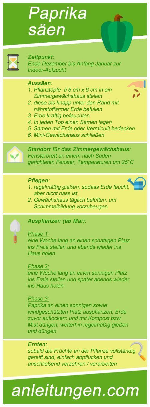 Aussaat von Paprika Wann und wie viele Paprika ausgesät werden müssen und welche Informationen Sie für den Anbau von Gemüse benötigen, erfahren Sie in dieser Infografik. - Martinez niw #anbauvongemüse
