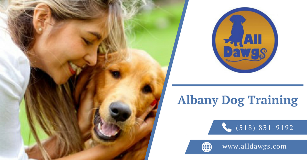 All Dawgs Offers Compassionate Effective Dog Training In Albany We Are Committed To Offering The Best Behavior Dog Training York Dog Dog Training Obedience