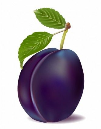 plum and leaves wackyfood pinterest leaves food clipart and rh pinterest co uk plum clipart black and white plum clip art outline