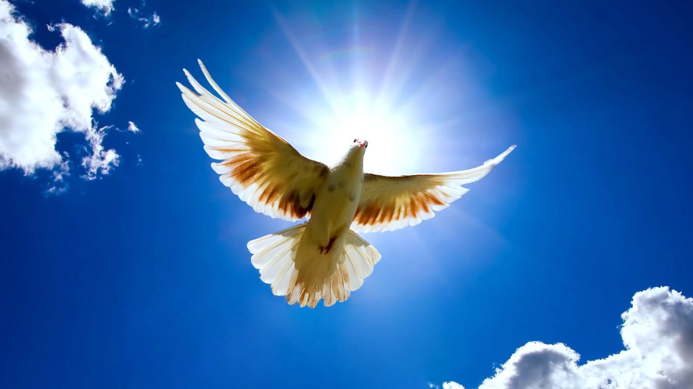 God Holy Spirit Beautiful Birds Bird Pictures Blowin In The Wind