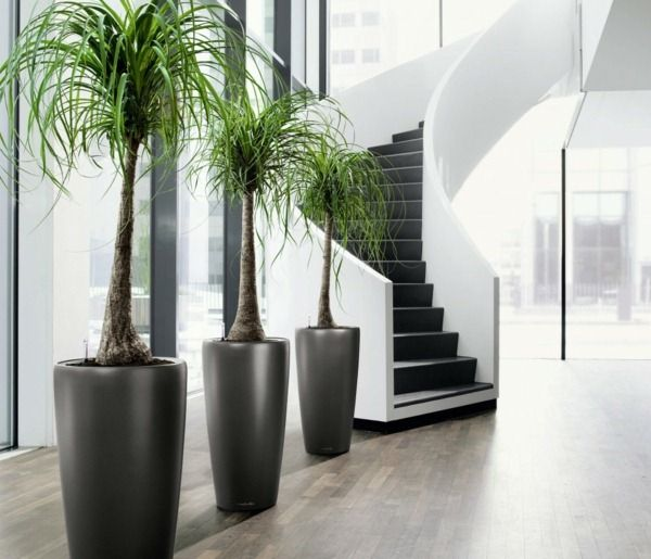 Grande plante int rieure d co salon pinterest plante for Grande plante appartement