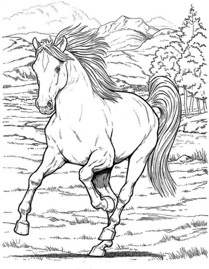 Free realistic wild Horse coloring pages to print | Animal Coloring ...