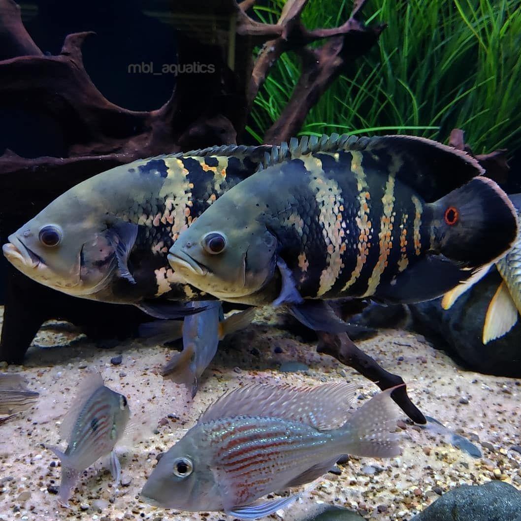 Aquariumfreshwaterfishpictures Tropical Fish Aquarium Aquarium Fish Saltwater Tank Setup