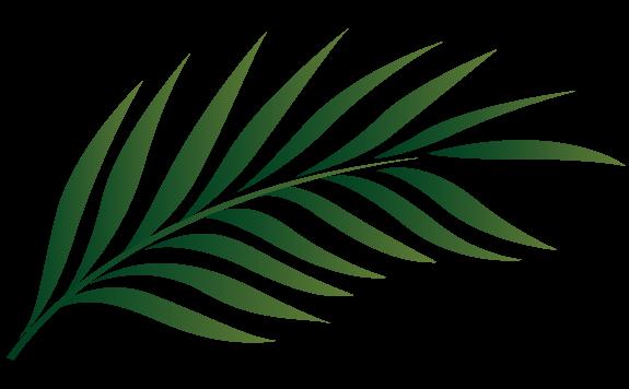 Related Image Leaf Outline Leaf Images Palm Leaves