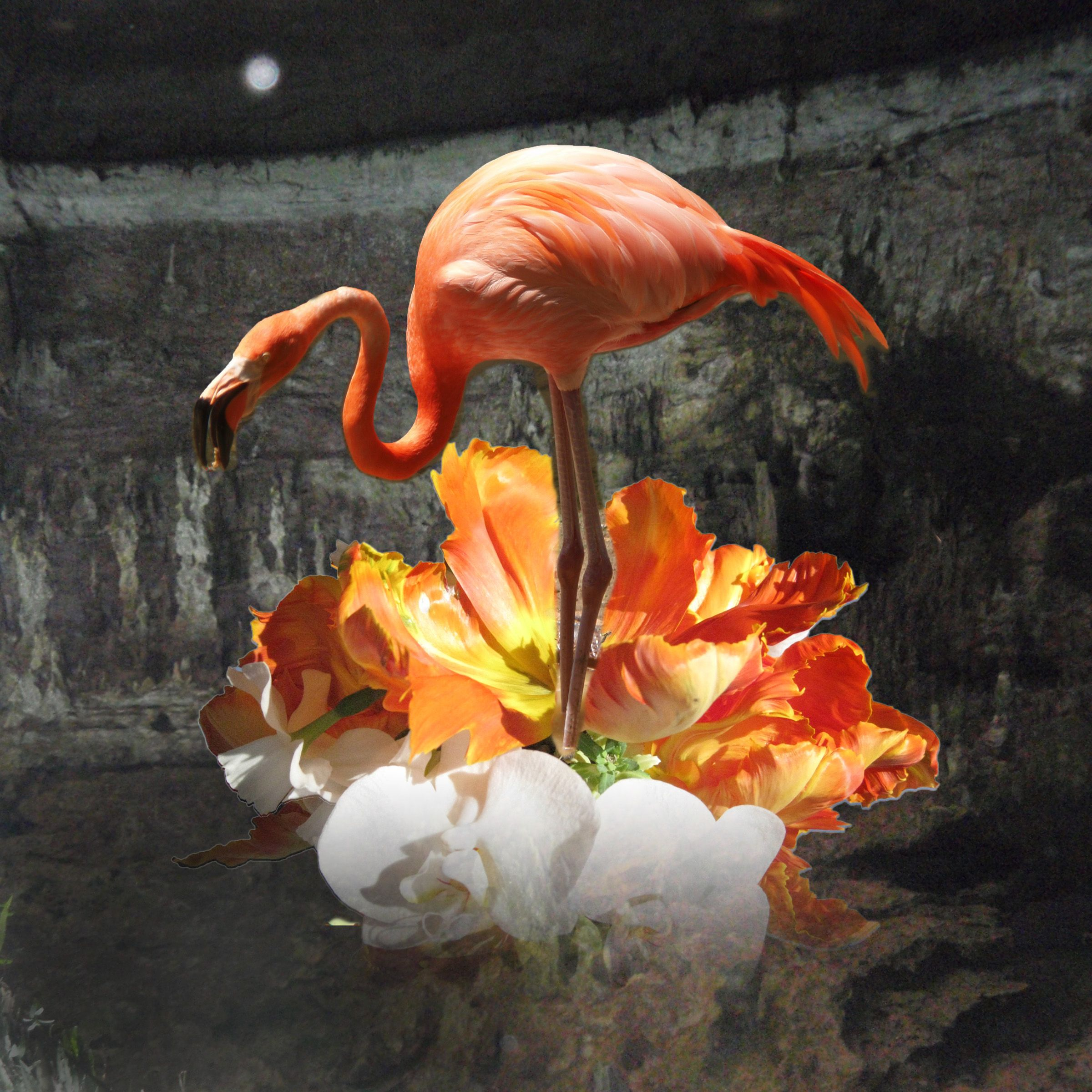 Flamingo In A Cenote Standing On A Orchid