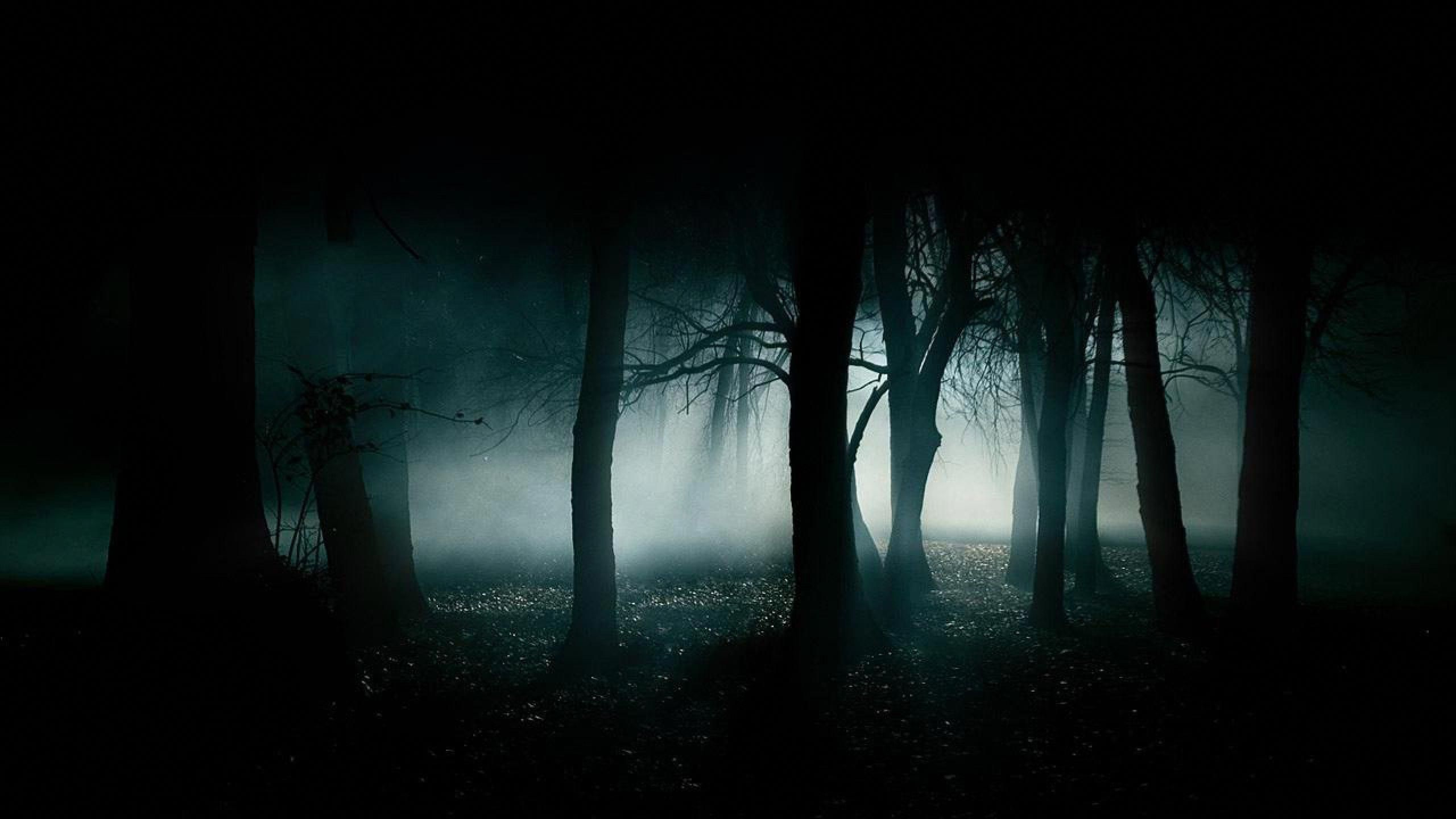 Pin On Camping Hd wallpaper tent camping forest fog
