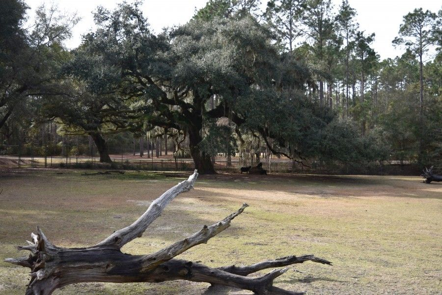 Brookgreen Gardens Lowcountry Zoo