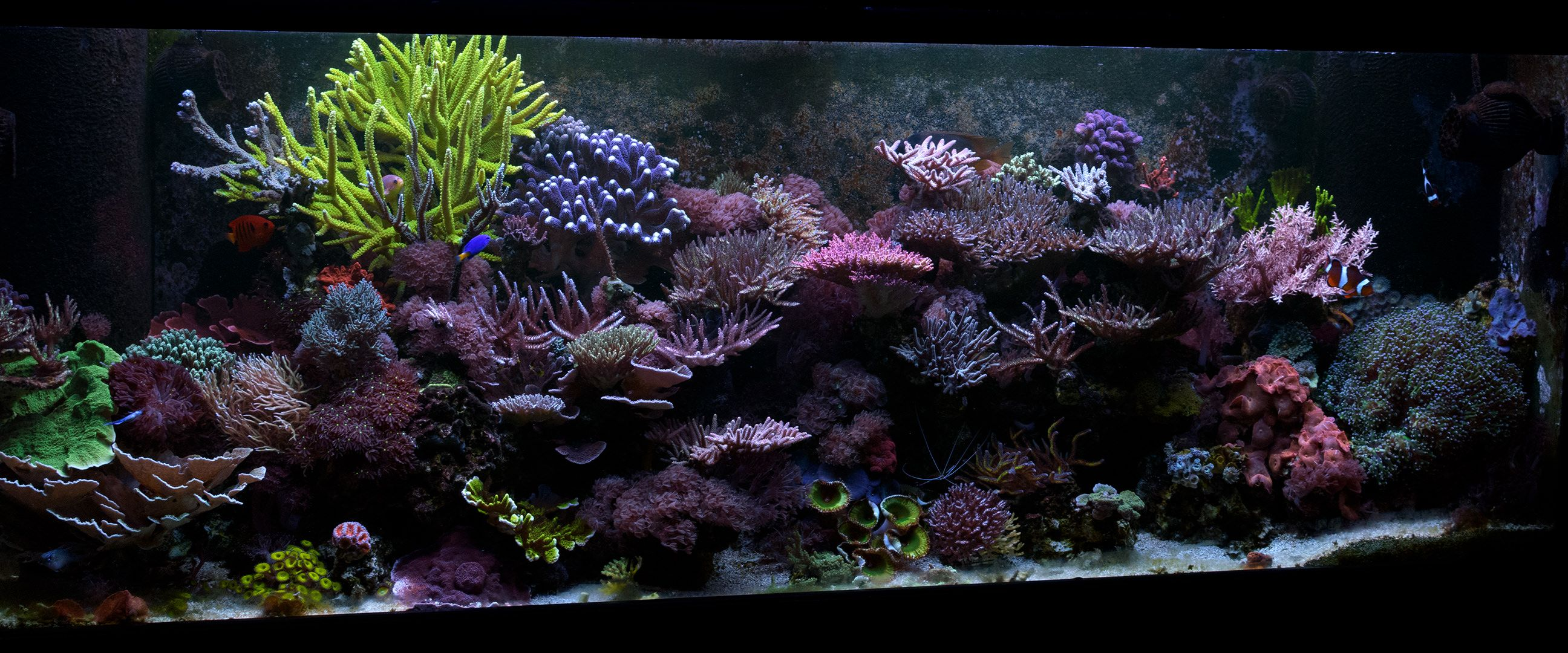 WOAH What word would you use to describe this REEF the link