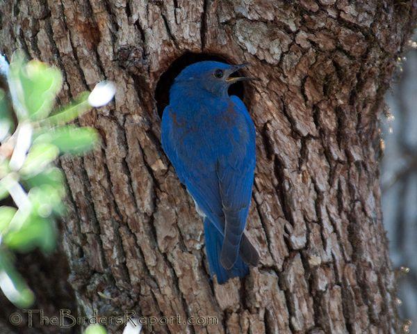 Somewhere Over The Rainbow Bluebirds Fly Blue Bird Over The Rainbow Colorful Birds
