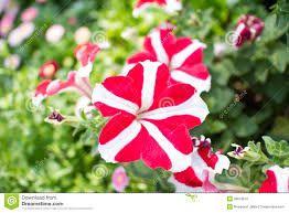 Resultado de imagem para flores raras