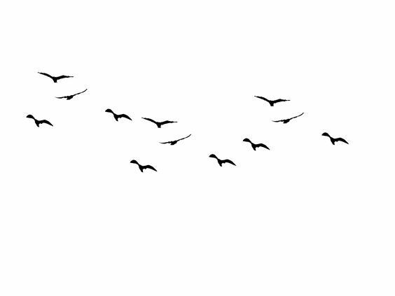 Spirits Bird Silhouette Flying Bird Silhouette Fly Drawing