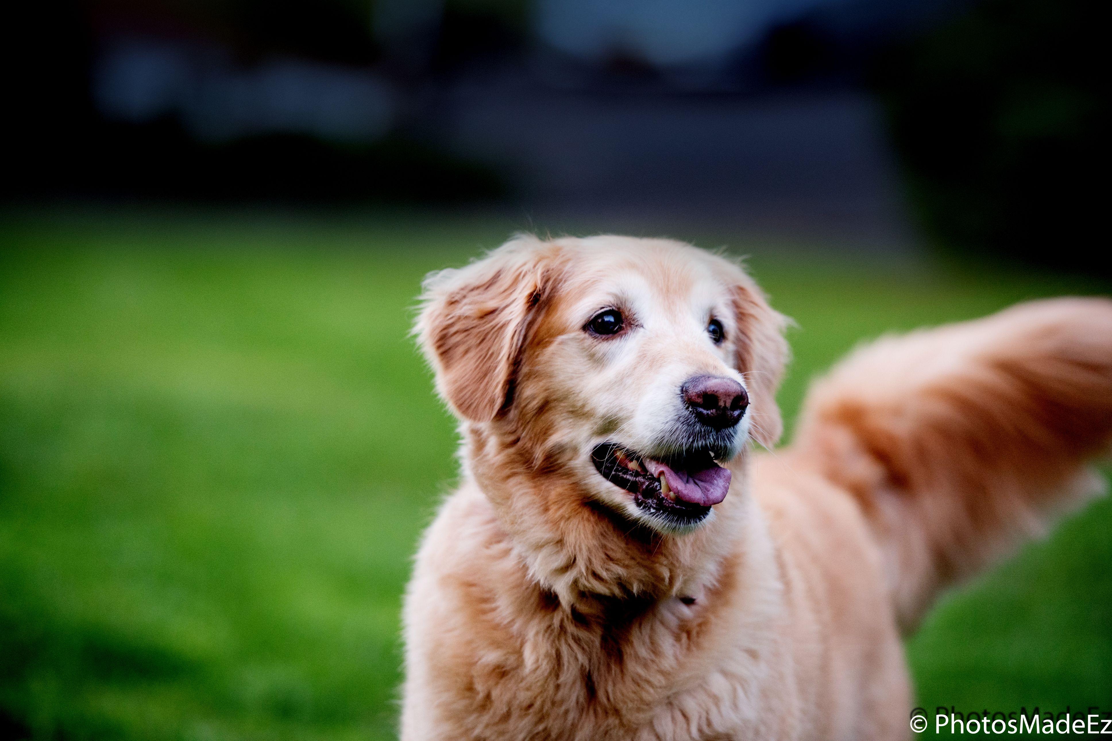 Pet Photography Animal Photography Dog Photo By Mou Mukherjee