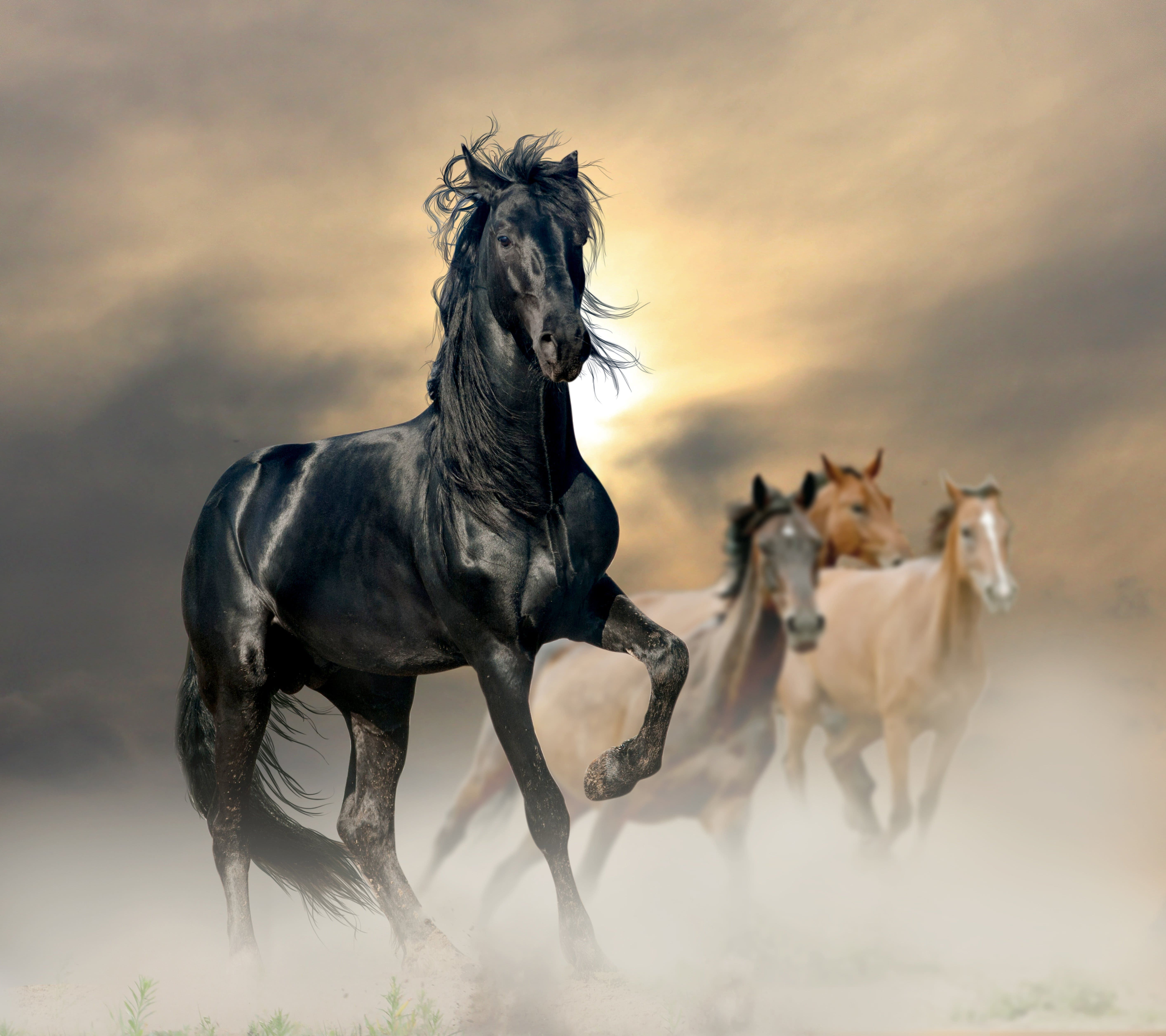 Great Wallpaper Horse Photography - 10f68185cd15b684dd8607b0438a69f4  Perfect Image Reference_419392.jpg