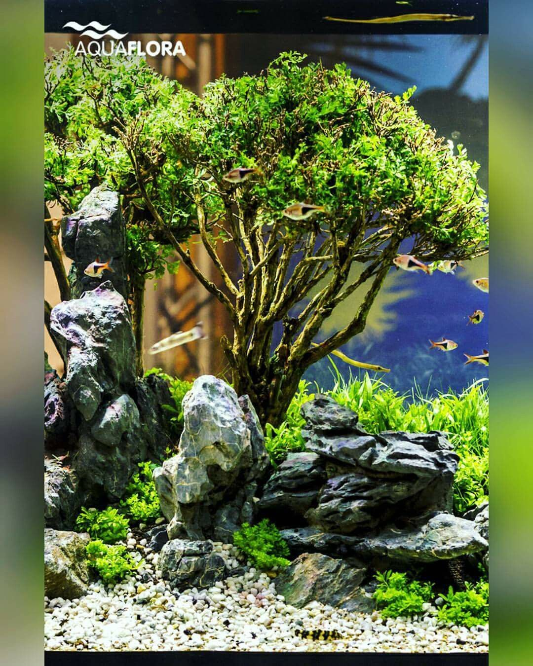 When Creativity Gets Close To Reality A Dead Bonsai Tree That Was Given A Second Life Under Water Planted With Aquascape Planted Aquarium Aquascape Aquarium