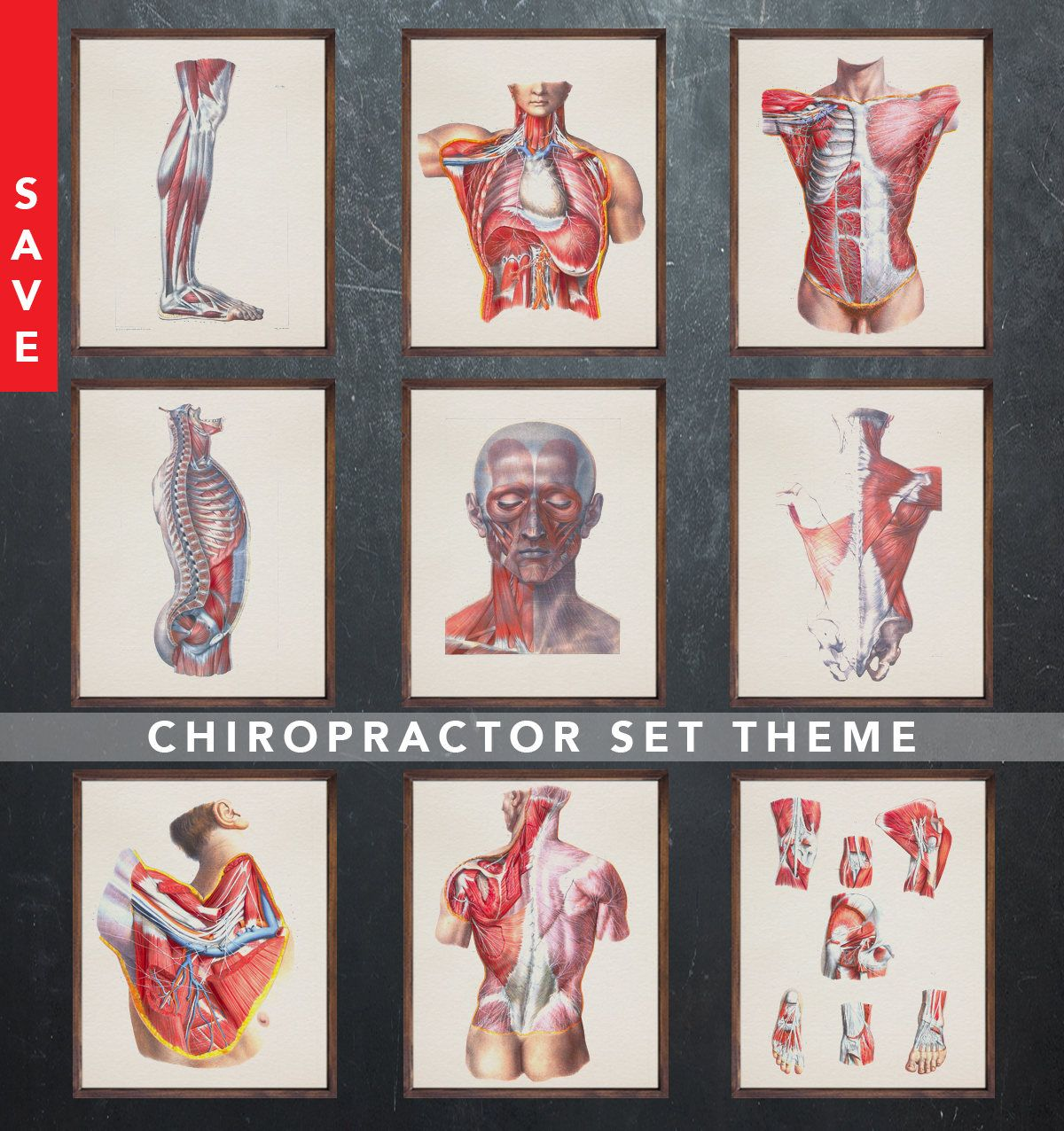 Anatomy Posters Chiropractor Chiropractic Physiotherapist Medical
