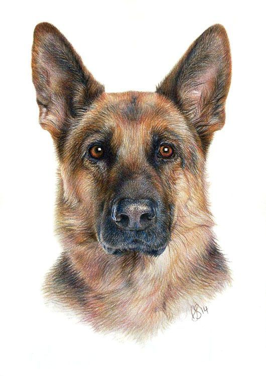 Pet Portrait Gallery Anna Shipstone German Shepherd Art Pet Portrait Paintings Pet Portraits