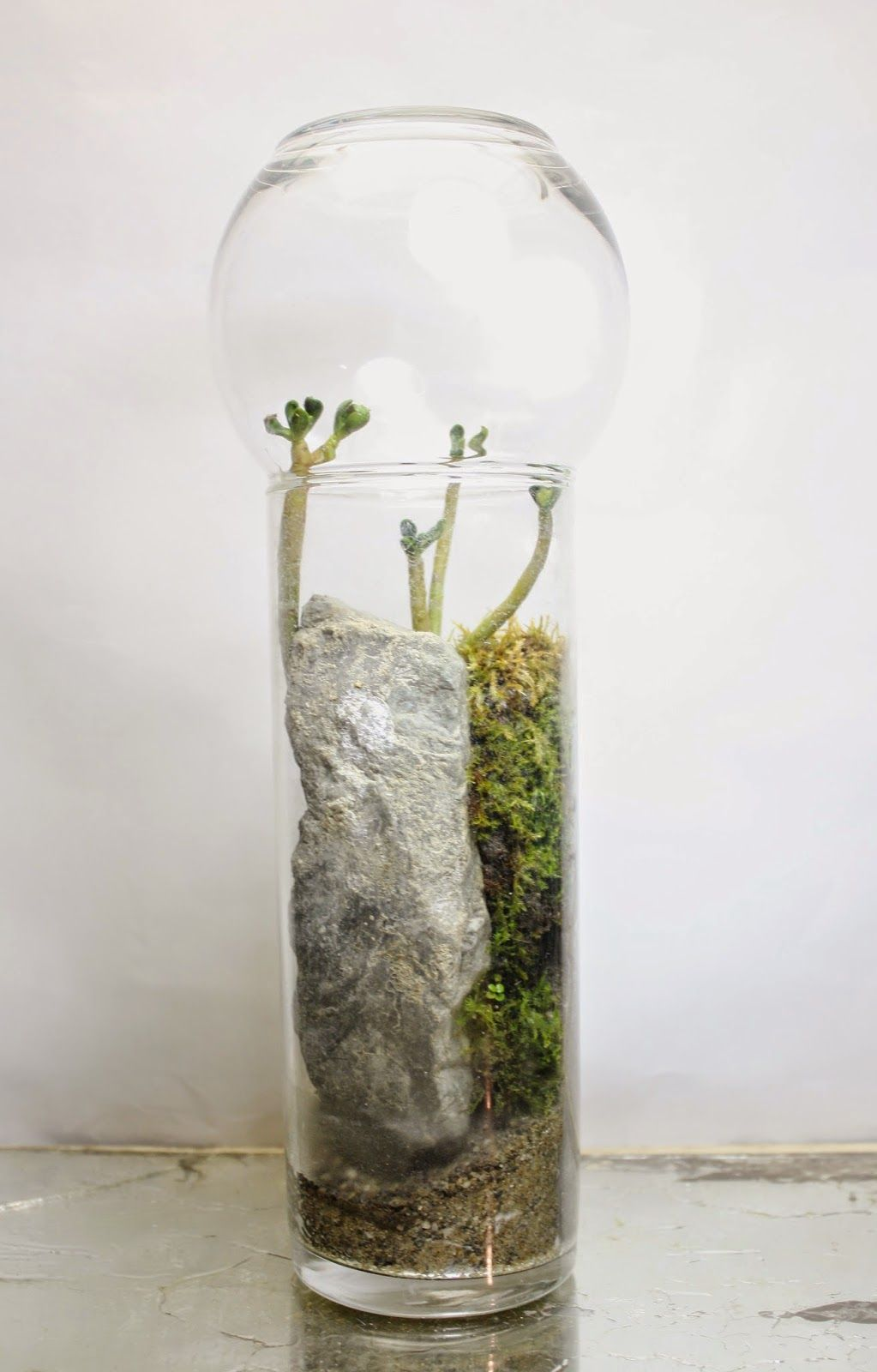 the slug and the squirrel:   it's a small world after all --- Great Terrarium Idea's ---                    ...