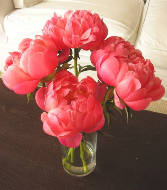 every girl should receive a bouquet of peonies in her life, at least once.