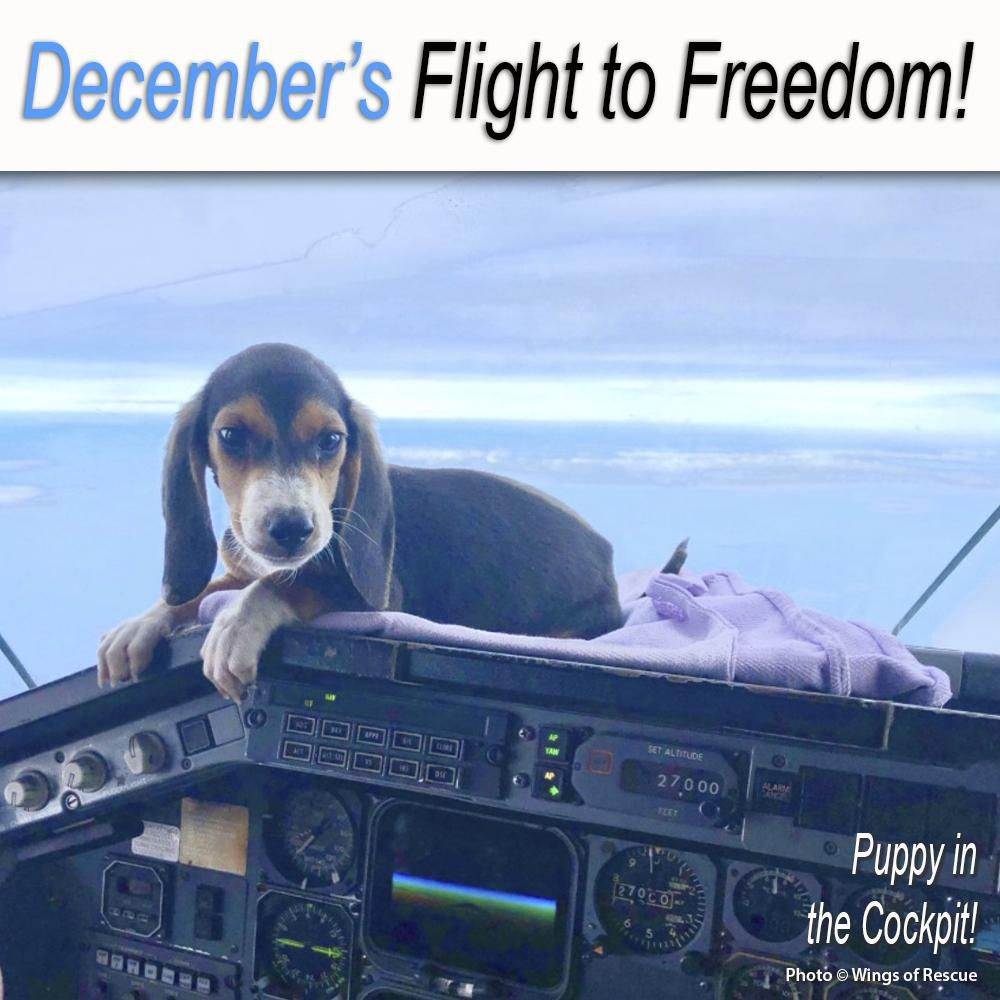 Help Fly Pets To Freedom Animal Rescue Stories Animal Rescue Site Pets