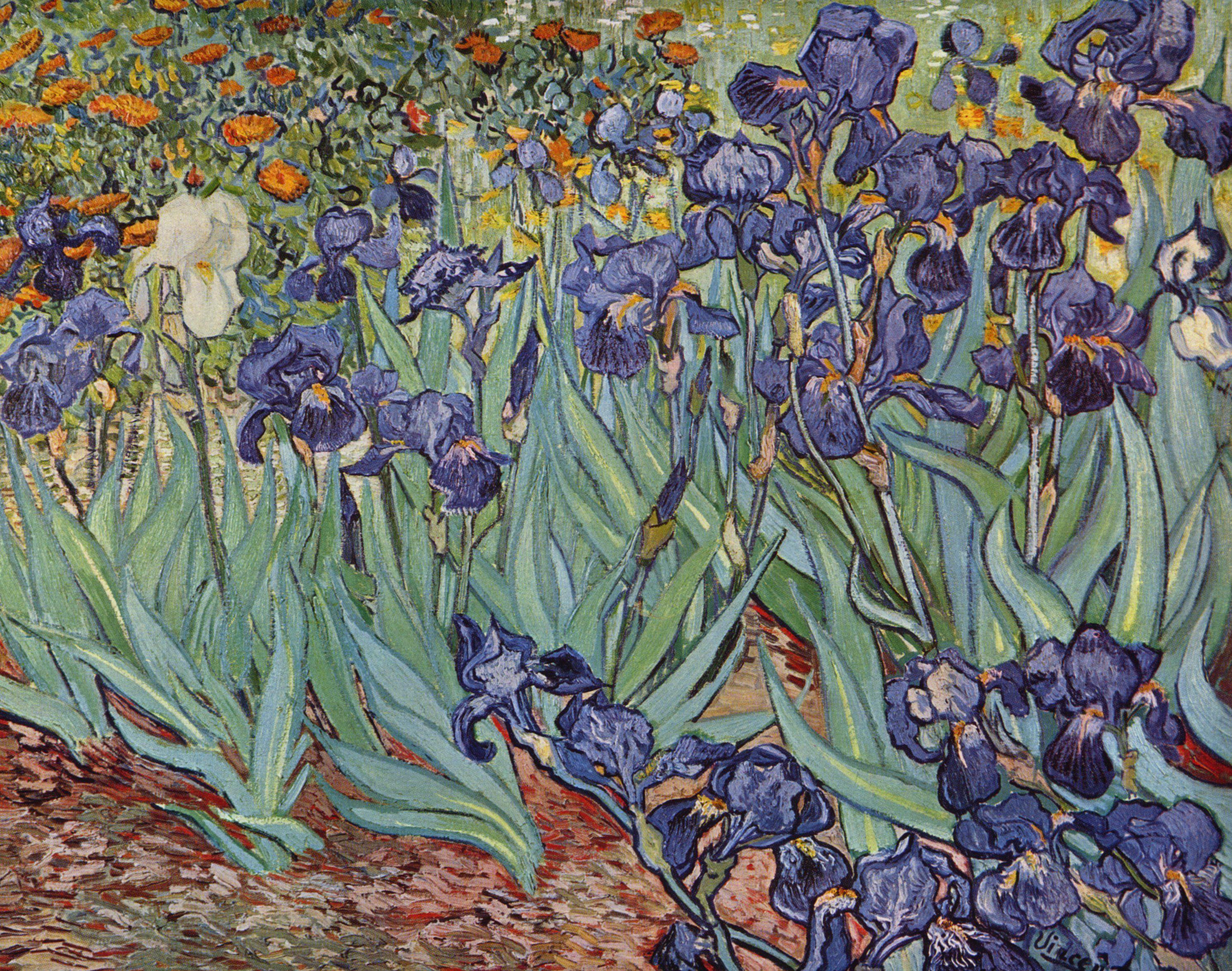 Irises 1889 art by van gogh vincent forerunner of for Van gogh irises