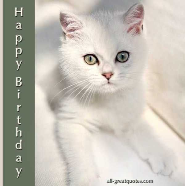 Happy Birthday To You Pretty Cats Beautiful Cats Cute Animals