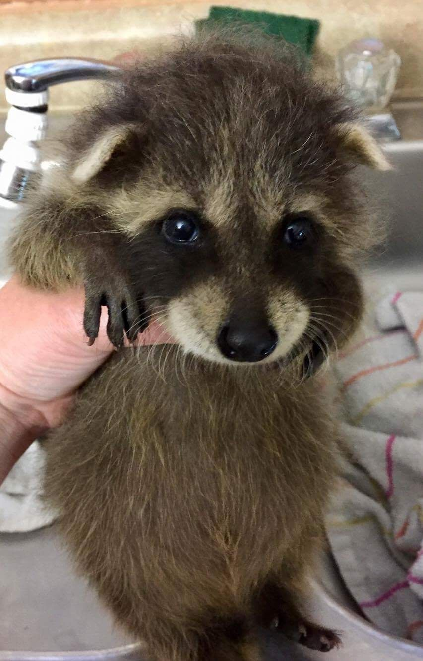 Will you keep me? in 2020 Cute baby animals, Animals