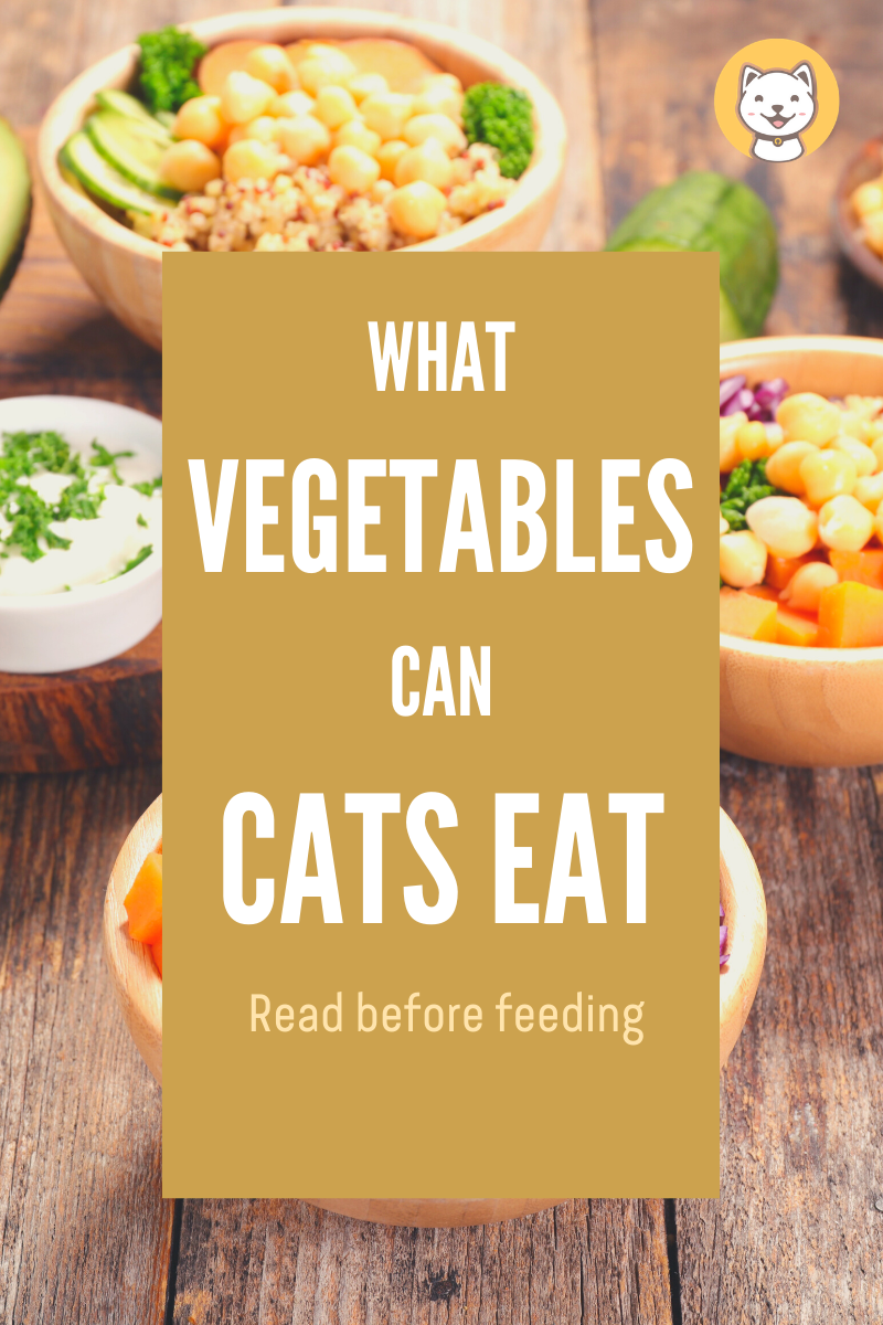 What Vegetables Can Cats Eat? Read before feeding (With