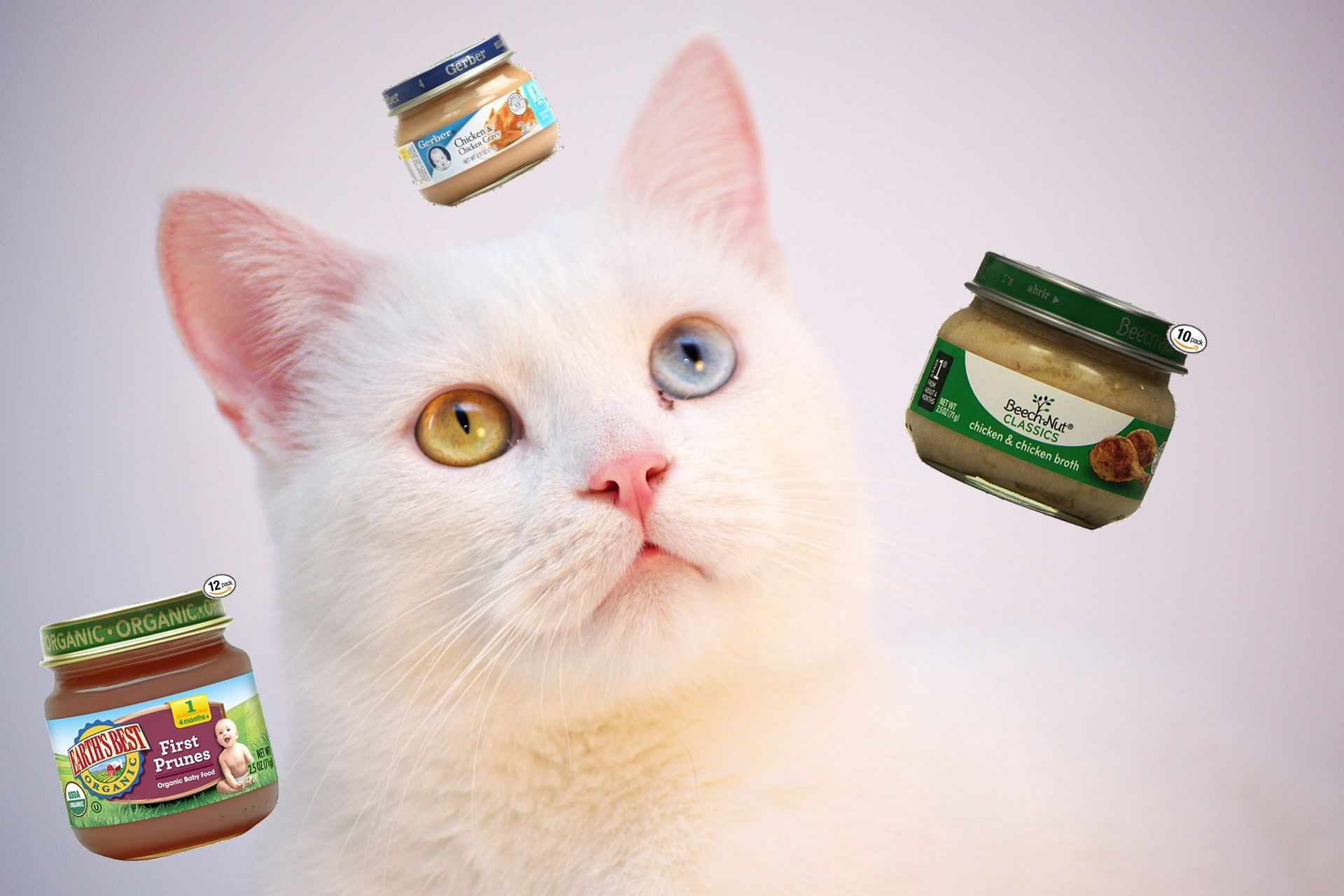 Can Cats Eat Baby Food? Best Baby Food for Cats Baby