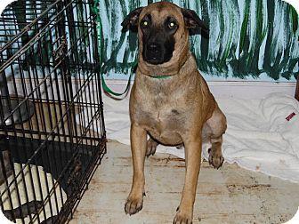 Thomasville, NC - German Shepherd Dog Mix. Meet Hubert, a dog for adoption. http://www.adoptapet.com/pet/11840900-thomasville-north-carolina-german-shepherd-dog-mix