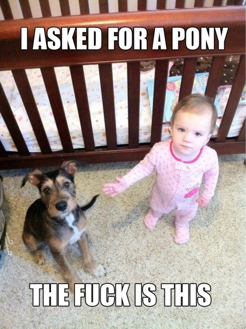 Even the dog looks confused!