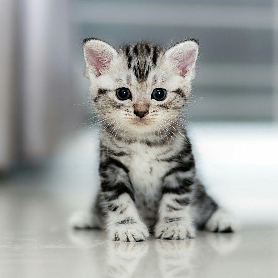 Pin By Samed Mirzoev On Portretnaya Fotografiya Kittens Cutest Baby Cats Cute Cats