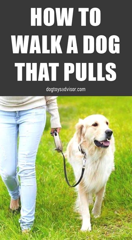 Bark Tudor Dog Training Indianapolis Dog Training Quotes Dog