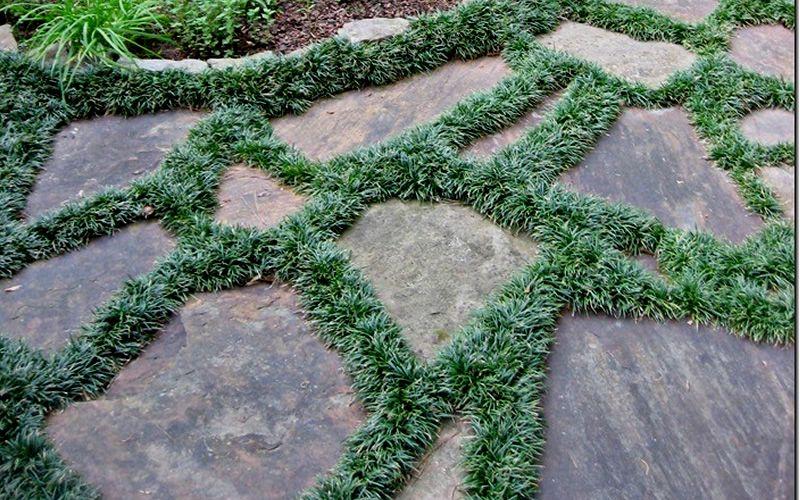 In Rhett S Back Yard Dwarf Mondo Grass Between The
