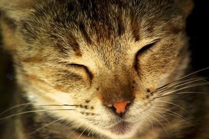 Do cats have a third eyelid?