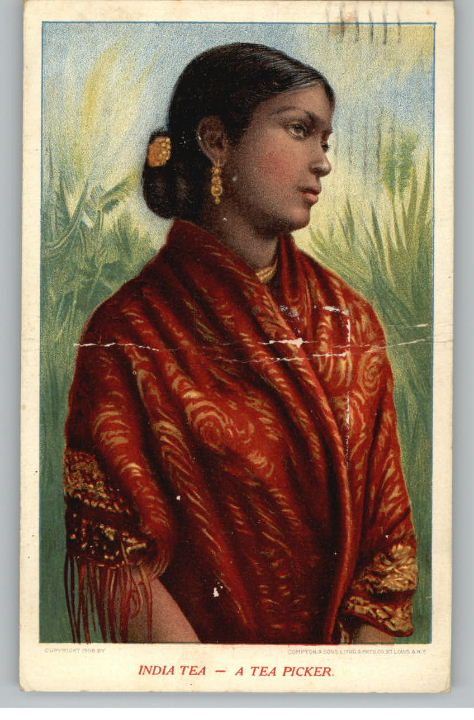 Old Postcard of Indian Tea Picker Woman - 1909