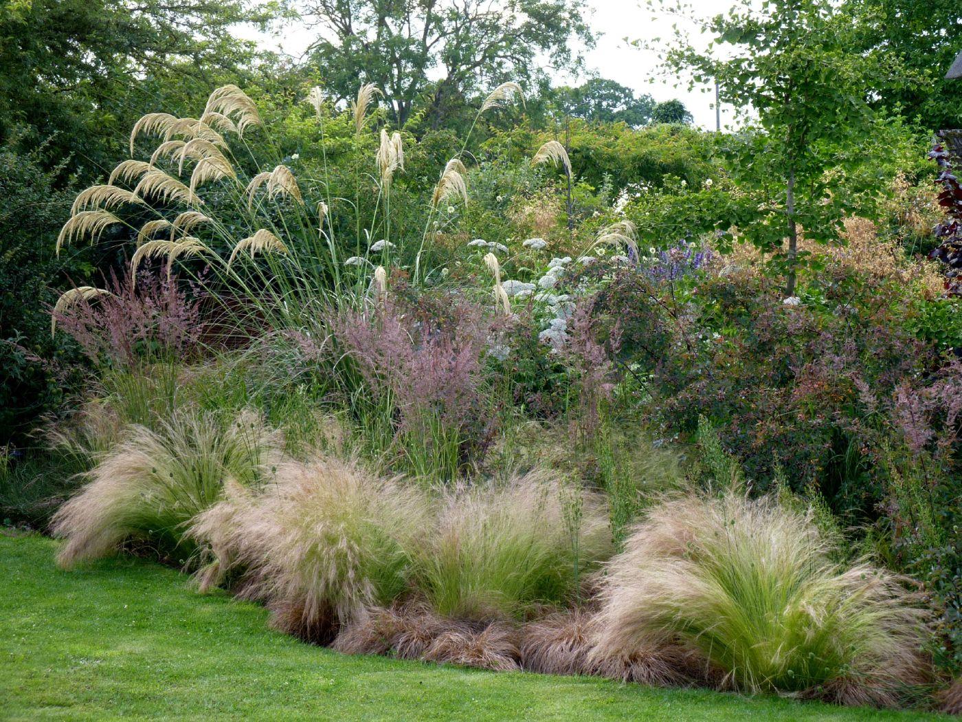 Les Plus Belles Graminées 5 raisons de choisir les graminées | aménagement jardin