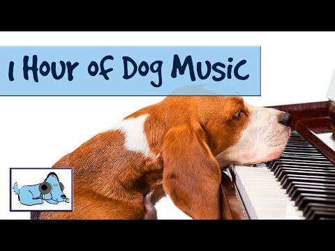 Over 1 Hour Of Relaxing Dog Music Music For Dogs Stop Barking