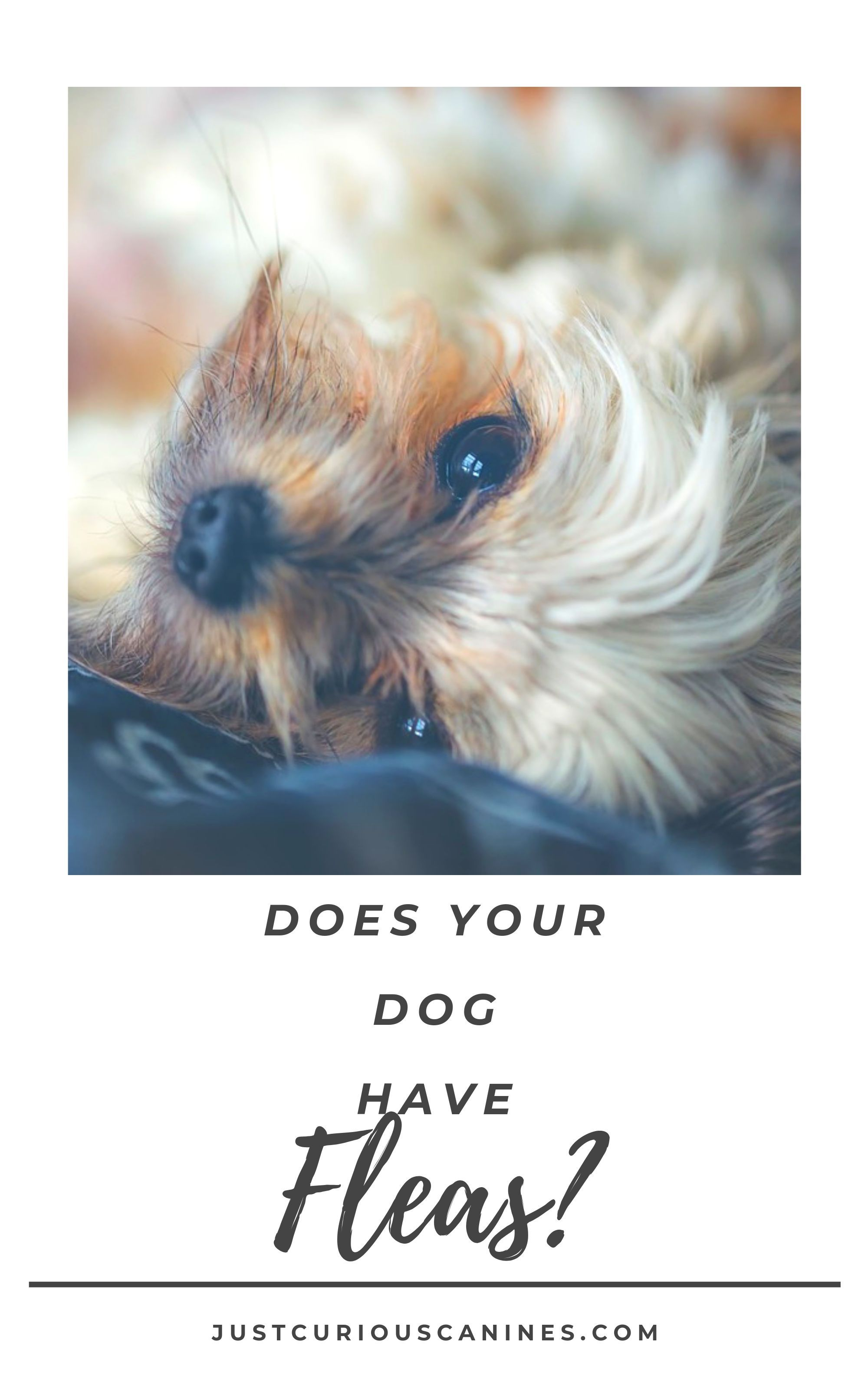 Does your dog have fleas dog wellness dogs your dog