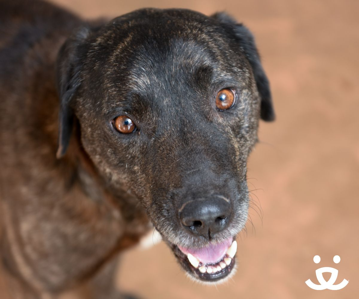 Adopt From Our Sanctuary Dog Adoption Animal Society Dogs