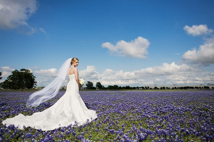 Bluebonnets The Perfect Wedding And Engagement Picture Backdrop