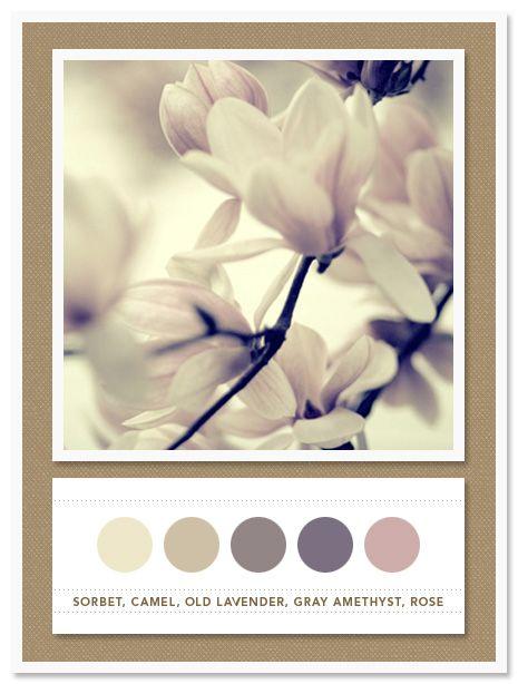 Colour Palette: sorbet, camel, old lavender, grey amethyst, rose