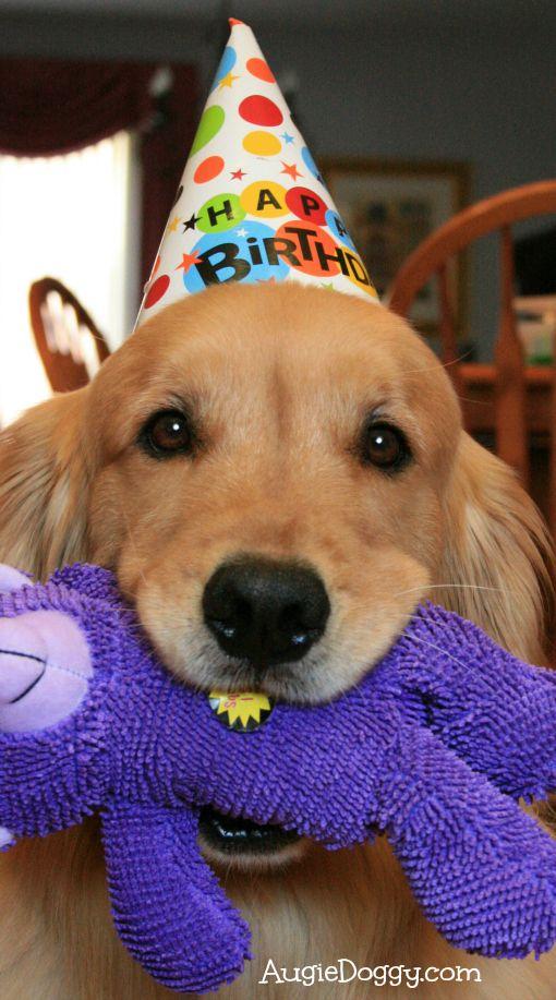 A Birthday Stuffie Dog Birthday Golden Retriever Birthday