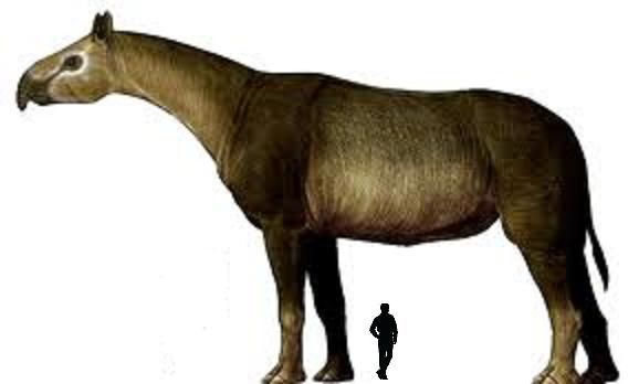 Indricotherium,the biggest mammal hard to believe it's a ...