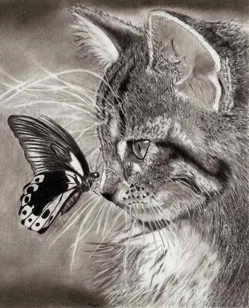 Pencil drawing of cat butterfly