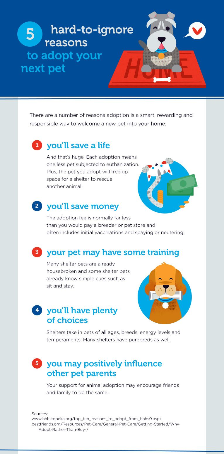 Adopting Pets From an Animal Shelter Dog spay, Dog facts