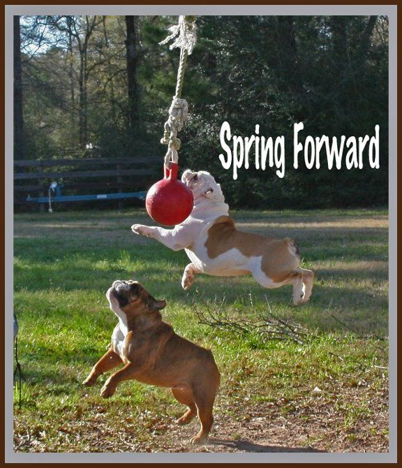 Daylight Saving Time Funny Animal Pictures Funny Animals Funny Dogs