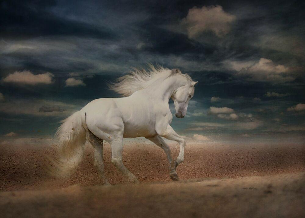 White Horse I Love Jockey Pegasus Hd Poster Horses Free Horses Horse Photos